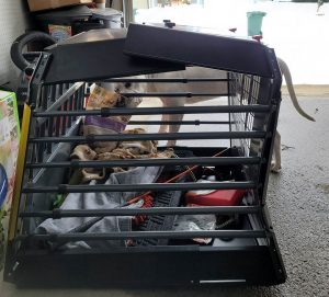 crash tested dog crate